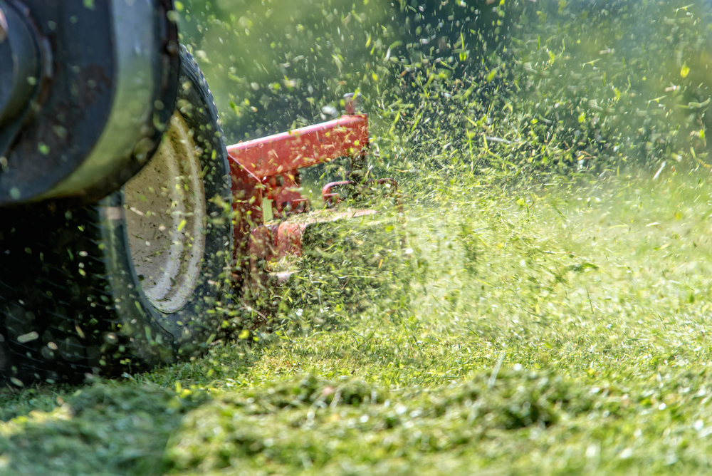 Picture of Lawn Services